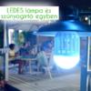Kép 1/4 - Szúnyogirtó LED lámpa UV-fénnyel E27 foglalatba