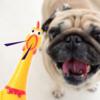 Kép 1/3 - Csipogó csirke kutyajáték - 30,5 cm (BPS-4597)