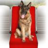 Kép 1/4 - Autós üléshuzat védő kutyáknak – 114x54 cm