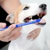 Kép 1/2 - Kétoldalú fogkefe kutyáknak, ujjra húzható fogtisztítókkal (BPS-2264)