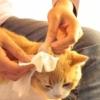 Kép 3/5 - Nedves törlőkendő háziállatoknak / 20 darabos kiszerelés