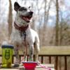Kép 4/8 - Hordozható étel- és italadagoló kutyáknak / összecsukható szilikon tállal