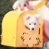 Kép 3/5 - Kisállat hordozó doboz / összecsukható szállítóbox