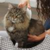 Kép 6/6 - Elektromos bolhairtó fésű kutyáknak és macskáknak