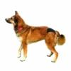 Kép 6/6 - Kutyabugyi, tüzelőbugyi cserélhető betéttel, több méretben / Kutya pelenka