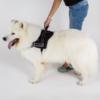 Kép 4/4 - Sport kutyahám - kényelmes kialakítású, piros