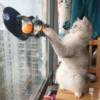 Kép 1/6 - Üvegre rögzíthető macskajáték / labdás játék macskáknak