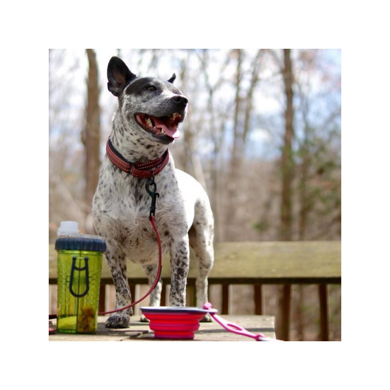 Hordozható étel- és italadagoló kutyáknak / összecsukható szilikon tállal